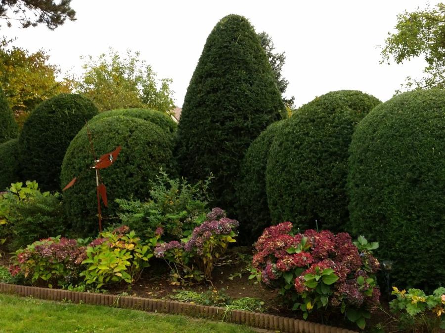 Gartenpflege Pflanzen beschneiden, Formgehölz