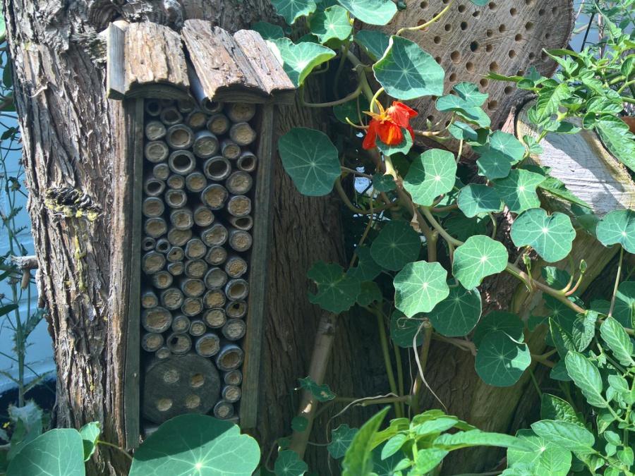 Baumstamm wird zum Insektenhotel
