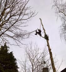 Baum fällen mit Klettertechnik in Lohmar