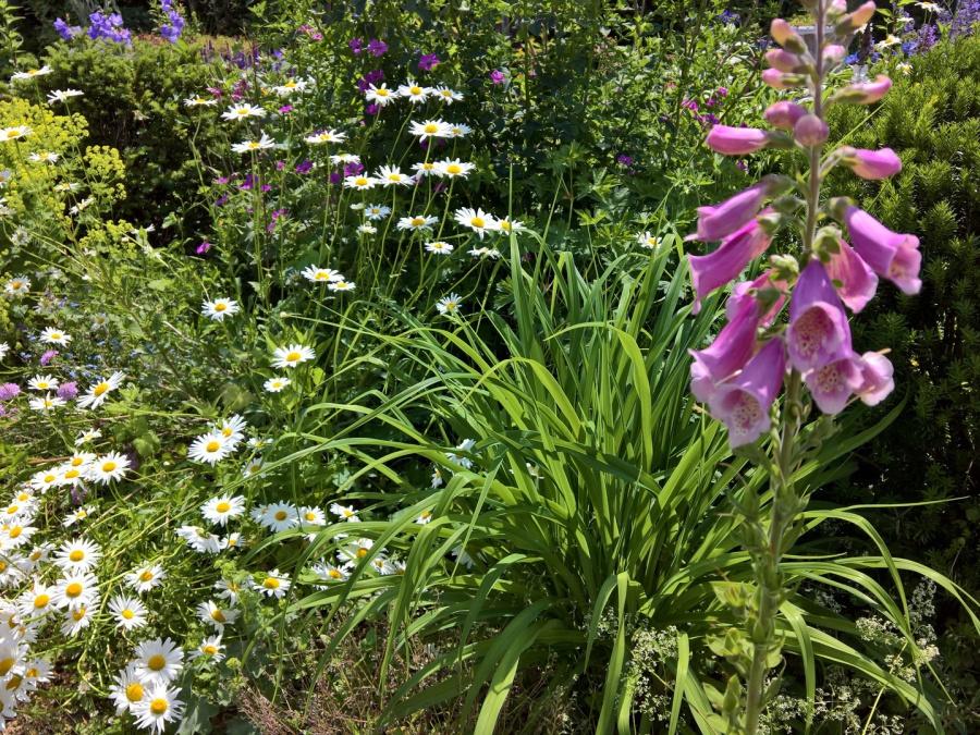Gartenpflege in Siegburg, Staudenbeet mit Wildblumeneinsaat