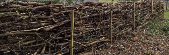 Benjeshecke oder Totholzhecke, sinnvolle Verwertung von Gartenabschnitten