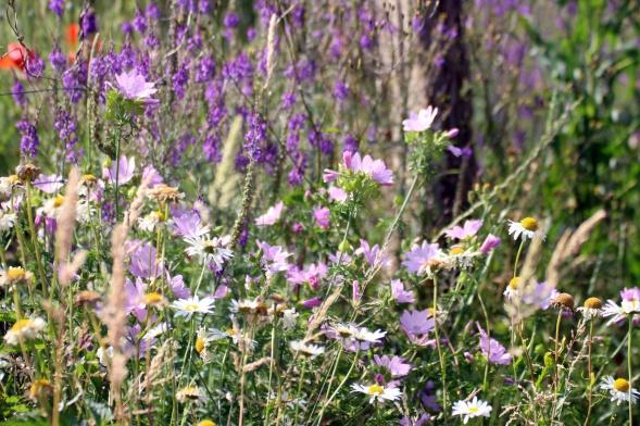Blumenwiese im Naturgarten