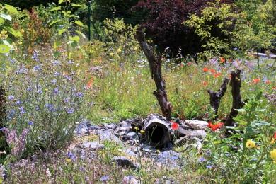 Blumenstreifen in Lohmar, Umwandlung vom Acker zur Blumenwiese