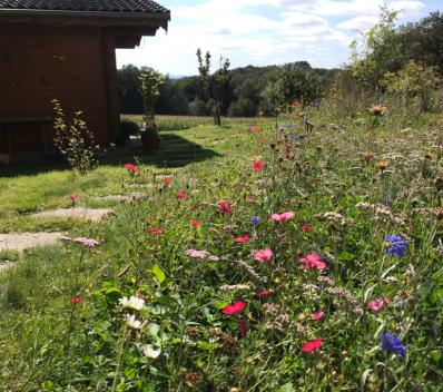 Blumen statt Rasen, Wildblumenaussat in Neunkirchen Seelscheid