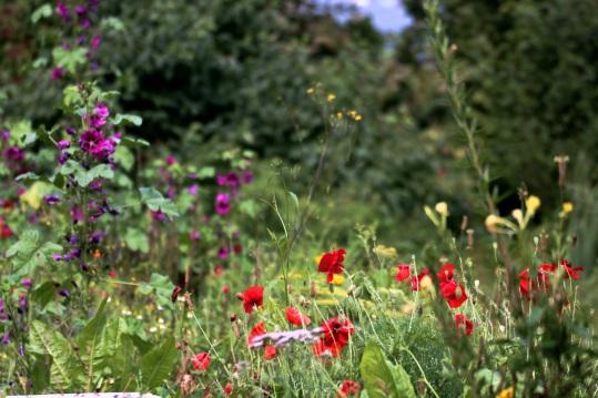 Für mehr Blumenwiesen in Neunkirchen-Seelscheid, Lohmar, Rösrath, Troisdorf, Overath, Siegburg, Hennef, St.Augustin,