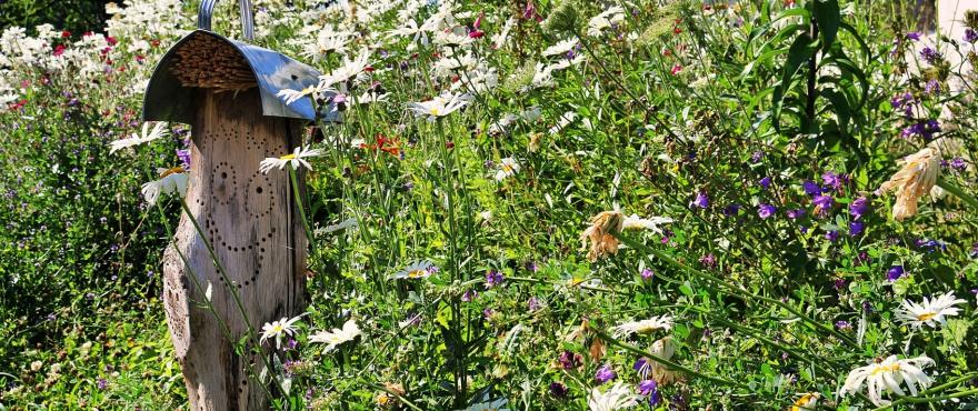 Wildblumeneinsaat Sandgartenprojekt in Siegburg
