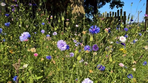 Gartenplanung und Gartengestaltung naturnah