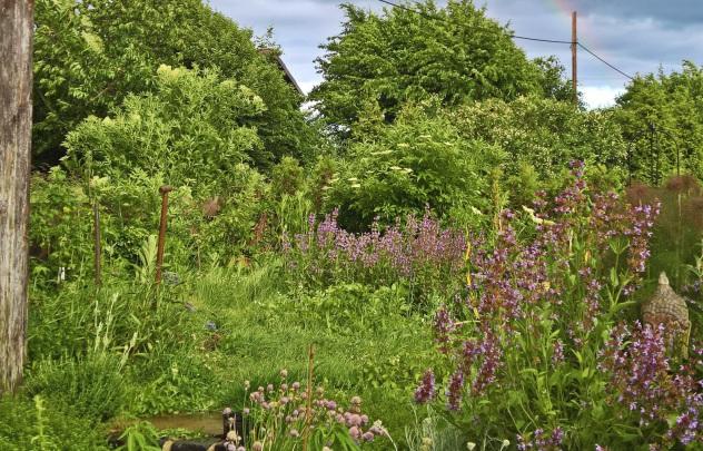 Wilder naturbelassener Garten